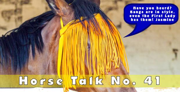 Horse Talk 41 Answer