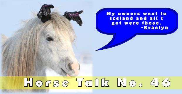 Horse Talk 46 Answer