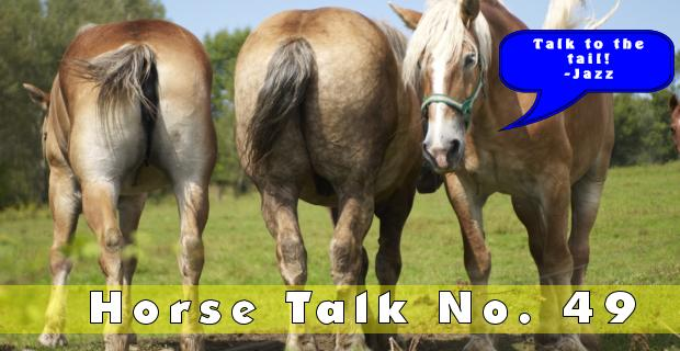 Horse Talk 49 Answer