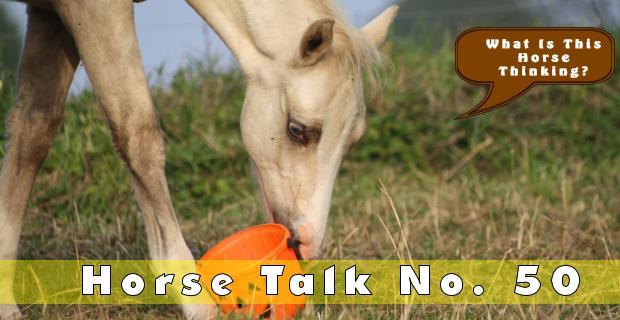 Horse Talk 50