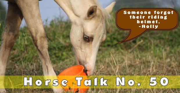 Horse Talk 50 Answer