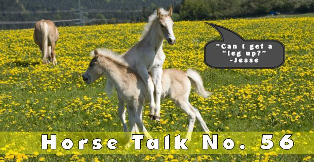 Horse Talk 56 Answer